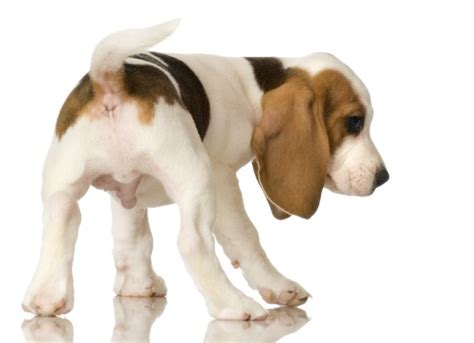 parasites in dogs parasitic infection neosporosis in dogs petmd