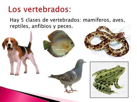 imagenes de animales vertebrados reptiles el mundo de los animales