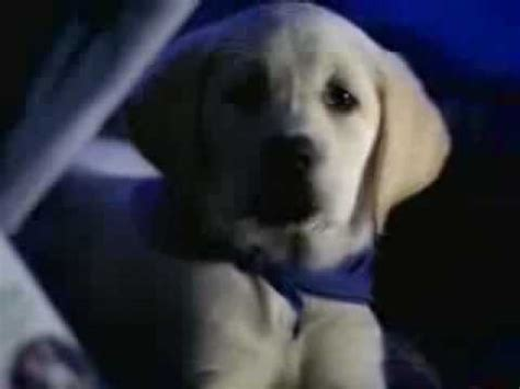k9 advantix puppy k9 advantix commercial