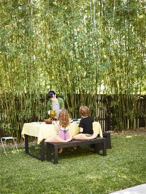 bamboo trees for backyard how to make an outdoor bamboo privacy screen woodworking