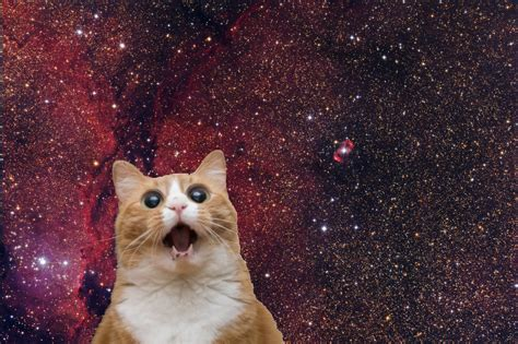 garfield cat wallpaper tumblr omg cats in space