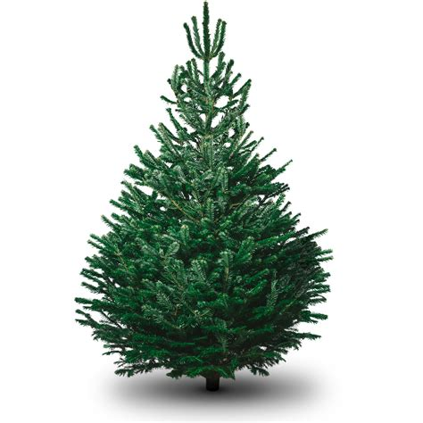 picture of a christmas tree non drop 3 9ft christmas trees uk