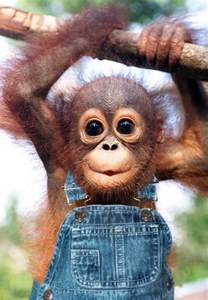 Hello i m funny monkey