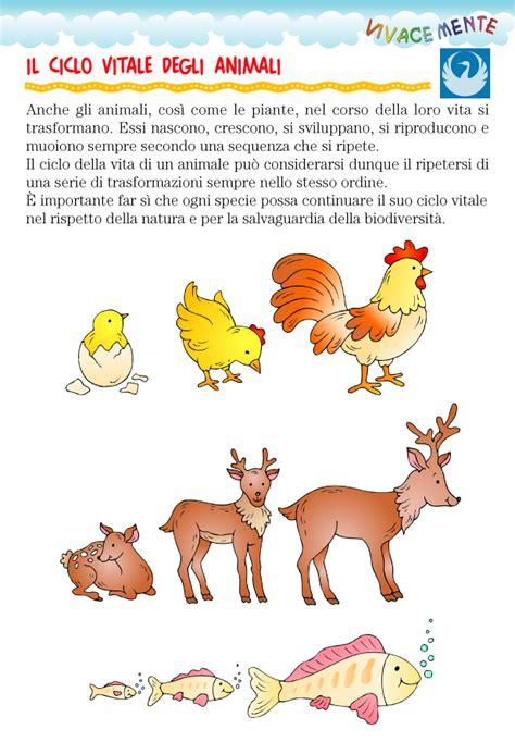 la catena alimentare spiegata ai bambini vivacemente il giornalino cuore e della mente ciclo