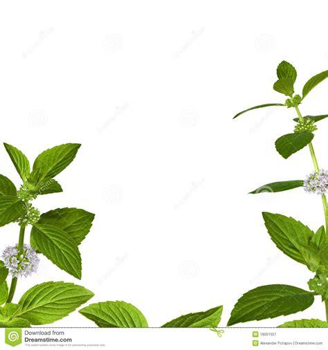fotograf 237 a oto 241 o en mendoza de luis vizioli en fotonat org marco de hoja fotomural oto 241 o marco hojas hojas vid