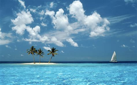 nature landscape island palm trees wallpapers hd