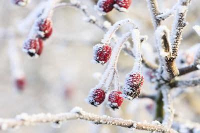 como hacer arboles de navidad con chamizos part 7 c 243 mo hacer nieve casera para decorar el 225 rbol de navidad