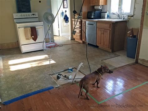 how to create a pet friendly kitchen pet friendly kitchen renovation ammo the dachshund