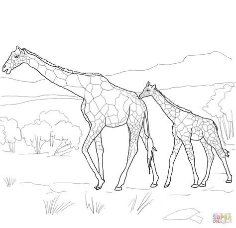 difficult giraffe coloring pages ausmalbild giraffen mutter mit jungtier ausmalbilder