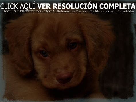 imagenes tiernas de bebes perritos gratis related keywords perritos gratis long