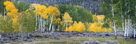 utah tree permits forest service utah s national forests begin sale of tree permits ksl