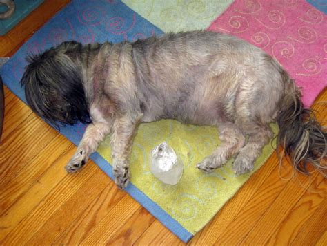 crystal healing  animals animal wellness guide