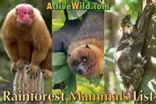 rainforest information archives active