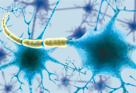 vasi linfatici vasi linfatici scoperto collegamento fondamentale tra