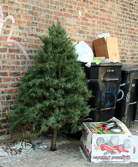 chicago christmas tree recycling 2012 chicago garden