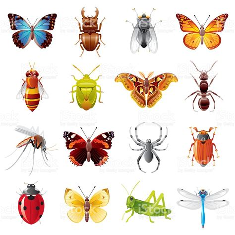 insectanatomy free insect animal pictures gallery insects icon set stock vector art more images of 2015