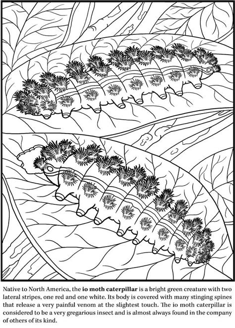 spark bugs coloring book dover coloring books books deadly insects and arachnids coloring book dover