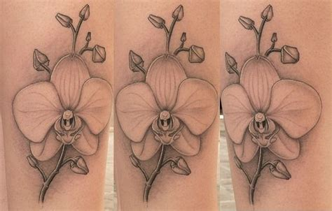 black orchid tattoo orchid black and white www imgkid the image