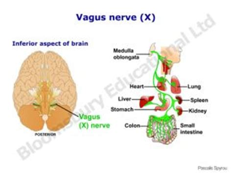 symptoms of nerve damage after c section 1000 images about gastroparesis on pinterest feeding