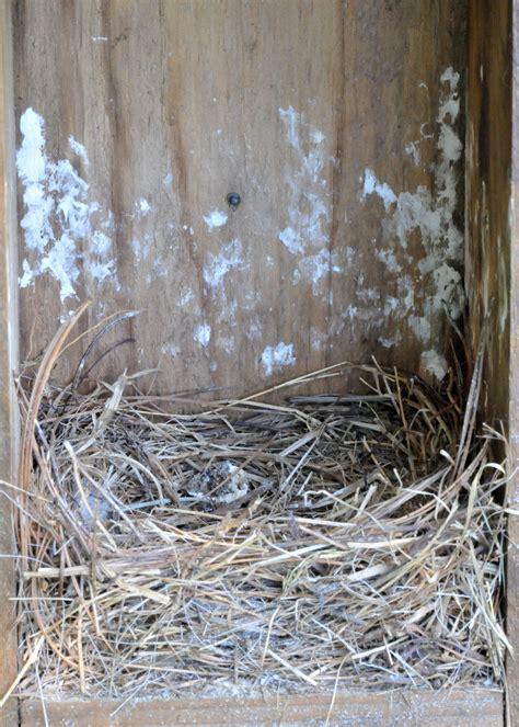 wp images blue bird post 3