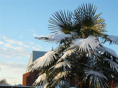 winterharde palmboom in tuin exotische tuin met palmbomen vicas tuinontwerpen