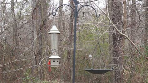 bird feeder the eliminator from wild birds unlimited in