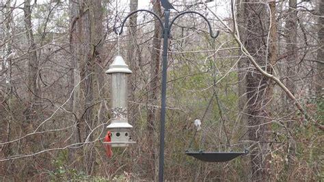bird feeder the eliminator from wild birds unlimited in