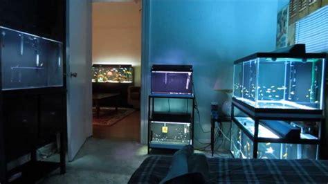 Basement Bedroom Ideas fish room tour youtube