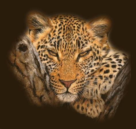 Jaguars Moving To La Lions Tigers Big Cats Animated Graphics Animate It