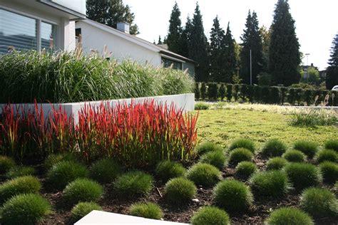 moderne trditionele tuinen pennisetum alopecuroides imperata cylindrica red baron en