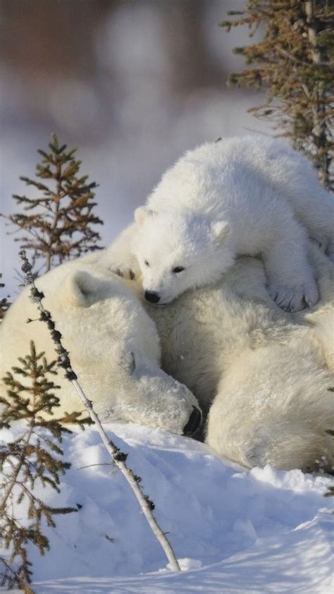 17 best images about animals on wolves polar cubs and birds