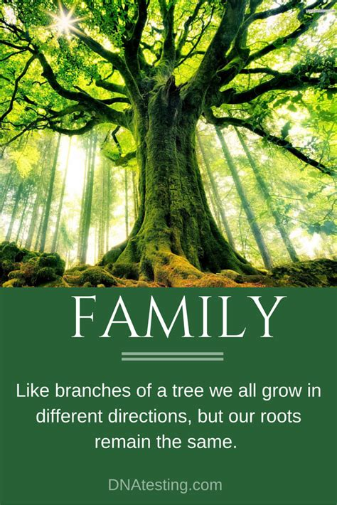 are you a branch on our family tree us history inspiration and quotes family like branches of a tree we
