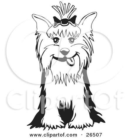 royalty  rf yorkie clipart illustrations vector