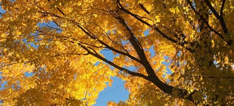 why leaves turn color in the fall why do leaves change color the science fall autos