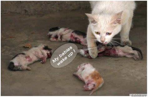 Kucing Ibu Dan Anak meh tengok menyayat hati ibu kucing meratapi kematian anak anaknya yang dibunuh