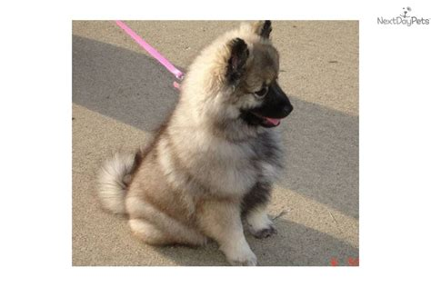 best age to take puppy home puppies for sale from bojett kennels member since april 2006
