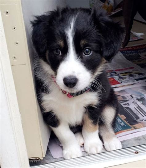 real puppy 10 to be real puppy pictures of the day october 9 2016 justviral net