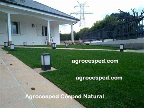 jardin con cesped ventajas del cesped natural agrocesped c 233 sped natural