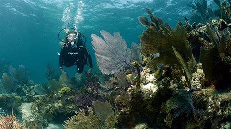 mares dive equipment cressi cressi professional scuba diving equipment cressi
