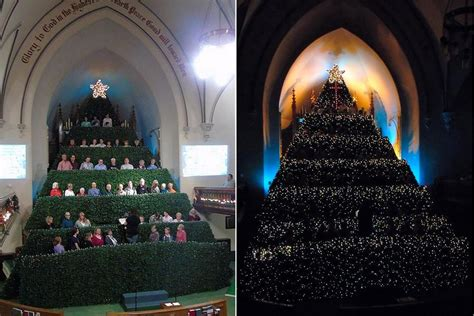 experience the wonder and joy of a living christmas tree