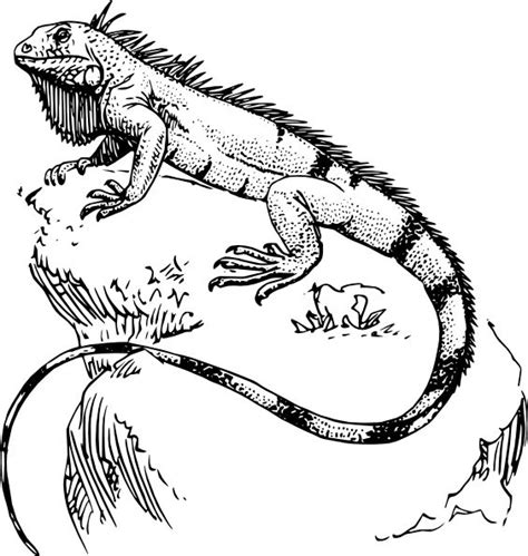 coloring page of iguana iguana coloring page pass the crayons pinterest