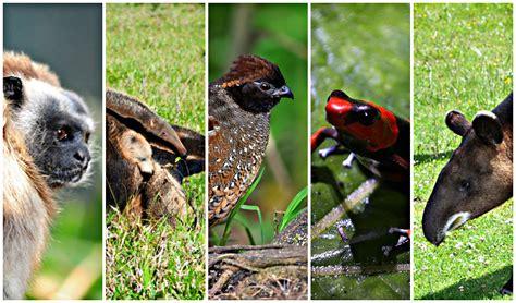 imagenes de animales endemicos cinco animales que conviven con el conflicto armado