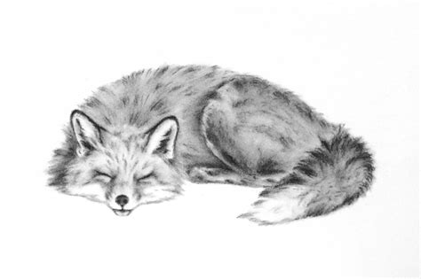 sleeping fox art original charcoal drawing animal sketch