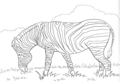 zebra pattern outline zebra outline www pixshark com images galleries with a