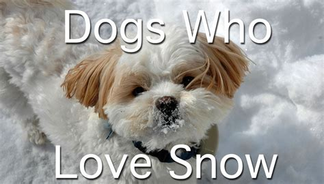 puppies in snow dogs in the snowfall of the year 1funny