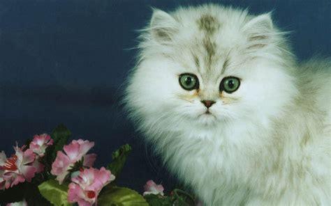 imagenes wallpapers gatos fotos de gatos gatos wallpaper fondos de pantalla