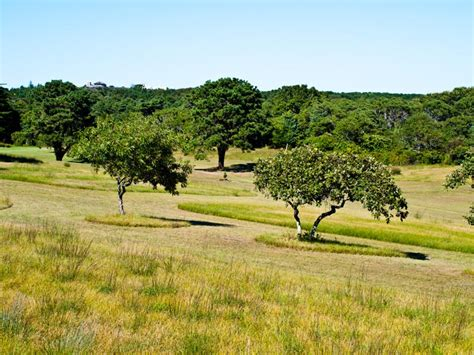 Chappaquiddick Golf Course The Vineyard Gazette Martha S Vineyard News No Fore Is Forever Chappy Golf Course Goes On