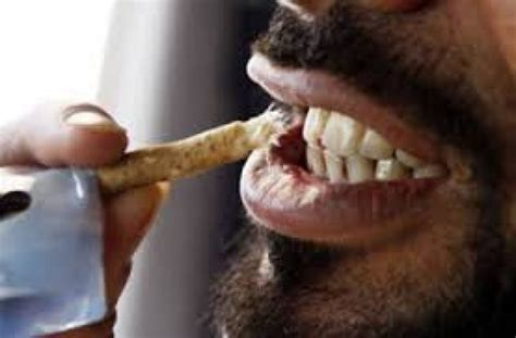 chew sticks surgeon cautions on use of chewing stick information nigeria