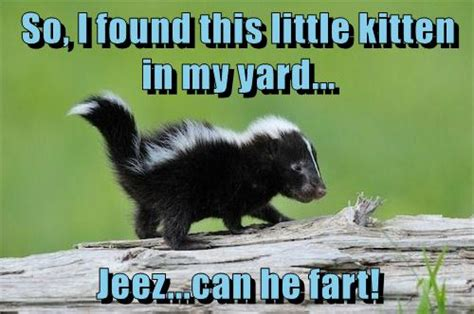 Skunk Meme - i can has cheezburger skunk funny animals online
