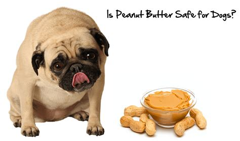 is peanut butter ok for dogs 2015 1 naturalpetwarehouse